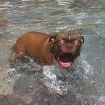 Dogs Versus Water Video
