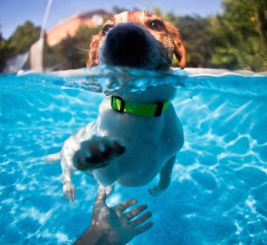 dog goes for swim