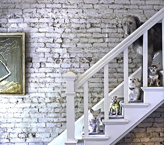 dogs on stairs steve grieg