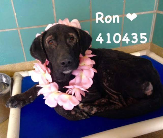 ron the shelter dog