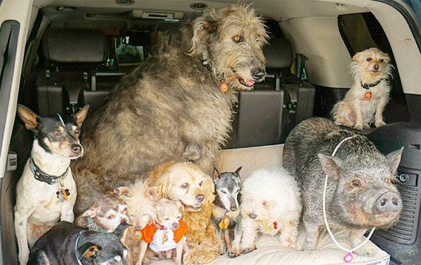 steve-greig-troadtrip with pets