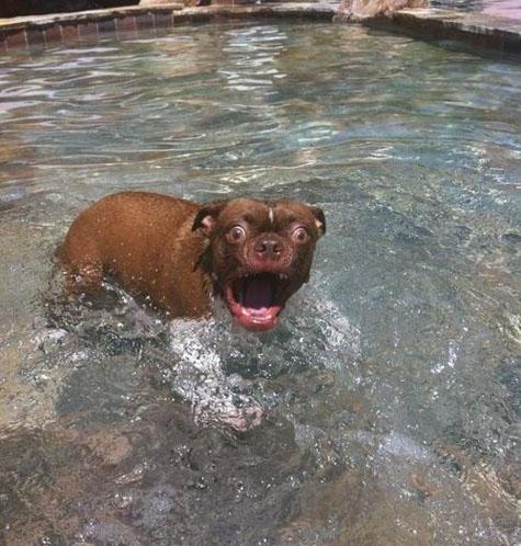 suprised dog