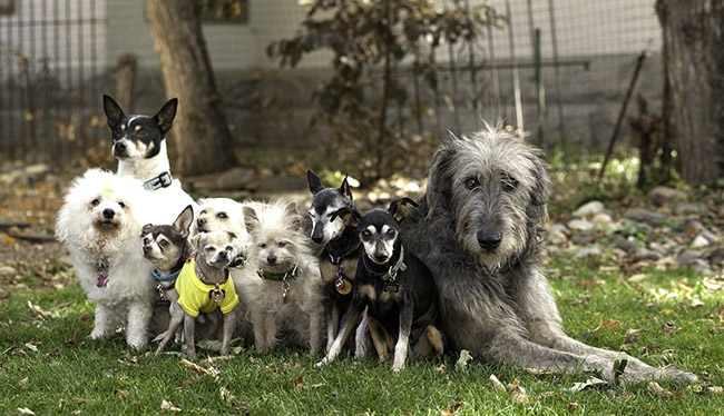the dogs of steve grieg