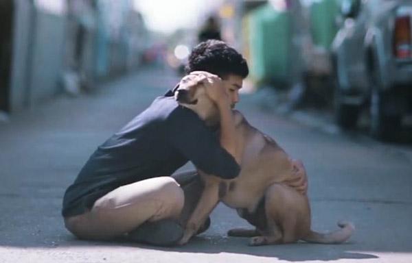 stray dog being hugged