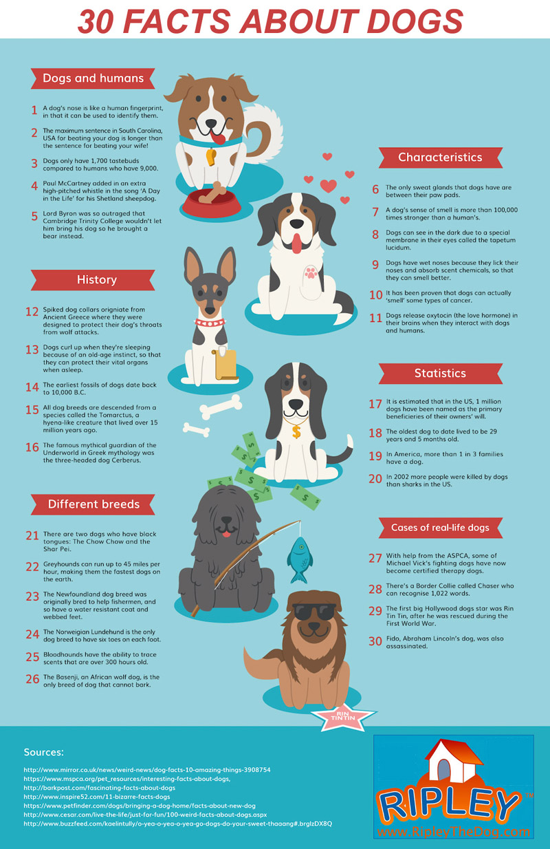 30 facts about dogs
