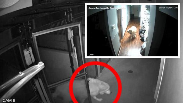 master escape dog on security cameras