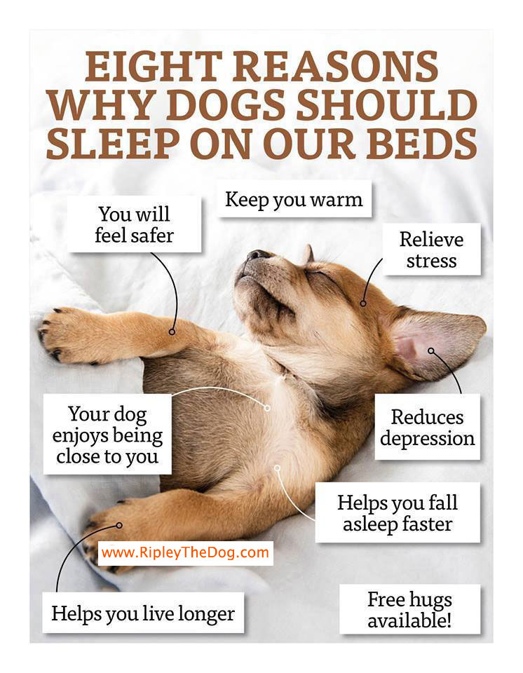 Eight Reasons Why Dogs Should Sleep On Our Beds