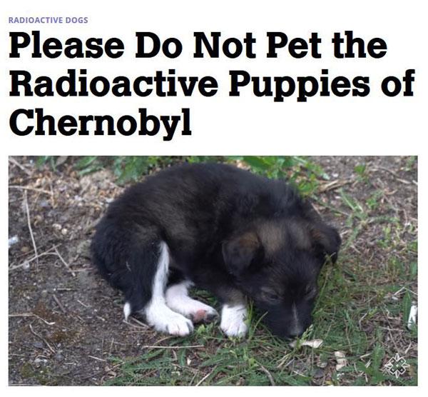 radioactive puppies