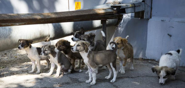 chernobyl-puppy-crowd