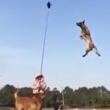 25 Foot Jump By Super Dog