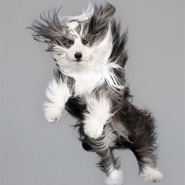 Portraits of Dogs Flying Through the Air