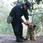 Retirement Home For Police Dogs