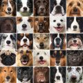 which dog breed is for you 380