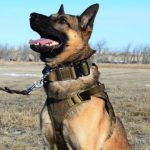 Military Dog Performance