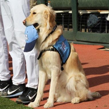 Golden Retriever Joins College Baseball Team