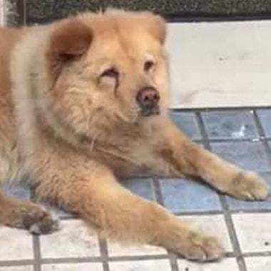The Loyal Dog