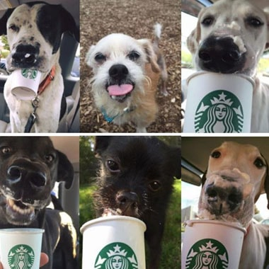 Shelter Takes Dogs Out For 'Puppuccinos' To Help Them Get Adopted