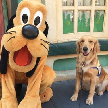 Service Dogs at Disneyland