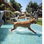 A Water Park Just For Dogs