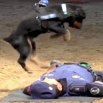 Police Dog Performs CPR On An Officer