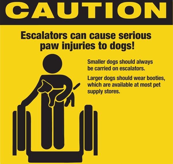 dogs and escalators