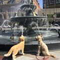 dog fountain 380