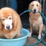 Smart Dogs Fill Up Their Pools