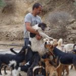 Guy Gives Up Everything To Save Stray Dogs